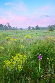 Peaceful meadow...beautiful skies.....
