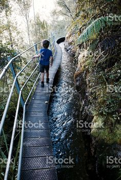 Child on Wooden Walkway royalty-free stock photo