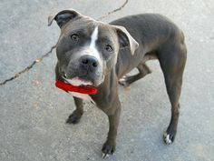 Safe - 11-29-2016   a1096796_rugby2