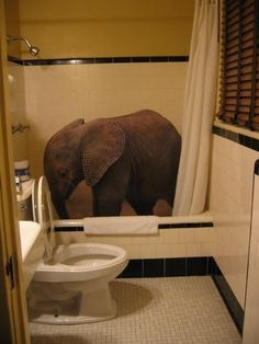 is an elephant in my shower. How much did I have to drink last night? All About Elephants, Elephants Never Forget, Save The Elephants, Baby Elephants, Elephant Love, Elephant Art, Giraffe, Elephant Shower, Animals And Pets