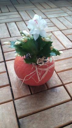 Hokkaido as flowerpot
