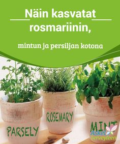 Näin kasvatat rosmariinin, mintun ja persiljan kotona  Yrtit, kuten #rosmariini, persilja ja minttu #sopeutuvat helposti erilaisiin #maaperiin ja ilmastoihin, joten niiden kasvatus kotioloissa on yleensä helppoa.  #Mielenkiintoistatietoa