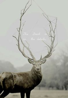 stag // Hannibal reference quote