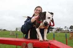 Can you help give easy going Eric the Staffie a new home?