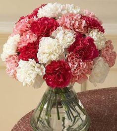 carnations (my fav flower) :)