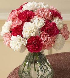 Anniversary, Carnation, Parents, Carnation, 24pcs of Carnation, Bouquet of Carnation
