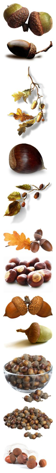 """Fall Nuts"" by nwmontana ❤ liked on Polyvore featuring autumn, plants, fall, fillers, food, nature, leaves, branches, backgrounds and flowers"