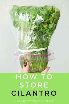 HOW TO STORE CILANTRO to make it last for weeks! This easy trick shows how to keep cilantro fresh in water in your refrigerator to last for 3 weeks! It's the perfect way to store cilantro for a long time! Cilantro How To Store, Fresco, Storing Fruit, Growing Herbs, Food Facts, Fruits And Veggies, Store Vegetables, Fresh Vegetables, Food Storage