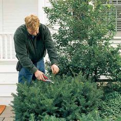 Tackle a little early spring maintenance to get your yard ready for the summer growth spurt to come. | Photo: Reena Bammi | thisoldhouse.com