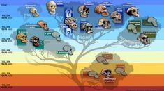 Tras el último descubrimiento del Homo Naledi, algunos arqueólogos pensaban que era la pieza que les faltaba para entender el linaje evolutivo pero a todo esto, no saben en qué período colocar al Homo y sobre si comparte algun rasgo directamente relacionado con nosotros.