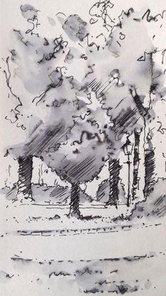 Harrogate Trees ~ sketch ~ John Edwards
