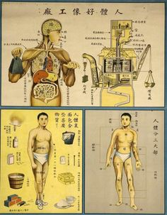 two chinese anatomical tables