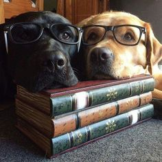 Shhhhh! We're studying!