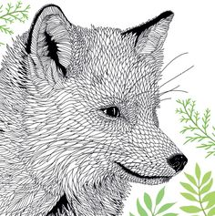 We have an exclusive fox illustration from The Menagerie: Animal Portraits to Colour for you to print off and use!The Menagerie: Animal Portraits to Colour is out now in paperback, priced £9.99 (LOM Art). http://www.mombooks.com
