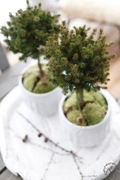 KUKKALA: Terassin vihreät + kuusen ranka