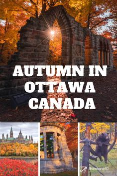 Ottawa is Canada's Capital and one of the best places in the country to view the fall colours. These are the unique things to do in Ottawa that cater to travel in autumn.   #ottawa #travel #ottawacanada #canada Ottawa Canada, Travel Videos, Autumn, Fall, Solo Travel, Cool Places To Visit, The Good Place, Things To Do, Colours