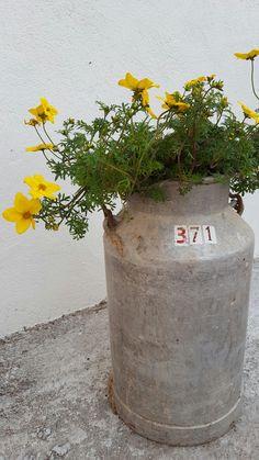 Blomster i melkespann