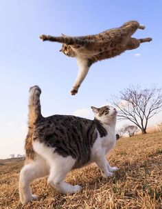 """* * CAT ON GROUND: """" Even tho he'z me nemesis; I gotta hand it to him for hiz technique."""""""