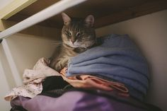 "Closet Kitty | Elise & Thomas | Couple Blog | Lifestyle & Photography | Blogging & Cats :: ""Disturbed him while he was having a nap which is why he looks grumpy AF but still completely adorable in my opinion ;). Love that lil ol face of his. shares Facebook Twitter Pinterest StumbleUpon Flipboard"" View the full post here: http://ift.tt/2dtAIrS"