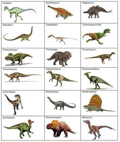 Different types of dinosaurs - dinosaur names can be divided into different kinds - species, what they ate, and by when they lived. Description from pinterest.com. I searched for this on bing.com/images