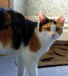 Love calico cats too!!