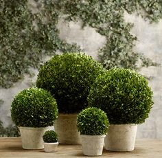 Preserve Boxwood - Part I - I like that she includes what works and what does not!