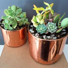 The colors of these succulents POP against the shiny rustic copper containers. They make my mantel so lively! If you're looking for the perfect home decor or centerpiece, these are a must! #succulents #succulent #homedecor #houseplant #succulentlife #succulentlove #succulove #plant #indoorgarden #succulentsofinstagram #plants #gardening #decor #614 #cbus #shoplocal