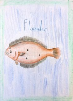 Waldorf ~ 4th grade ~ Human & Animal ~ Flounder ~ main lesson book