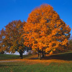 Baltimore County, MD - The South's Best Fall Colors - Southern Living. somebody needs to paint me this picture