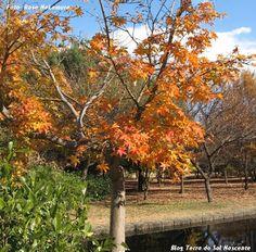 Lindo outono e frase de Clarice Lispector