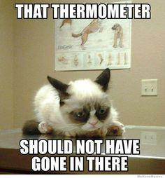 Sedating a cat for vet visit meme