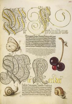 [folio 112r] Joris Hoefnagel (illuminator) [Flemish / Hungarian, 1542 - 1600], and Georg Bocskay (scribe) [Hungarian, died 1575], Butterfly, Sweet Cherry, and Land Snails, Flemish and Hungarian, 1561 - 1562; illumination added 1591 - 1596, Watercolors, gold and silver paint, and ink on parchment, Leaf: 16.6 x 12.4 cm (6 9/16 x 4 7/8 in.), 86.MV.527.112.