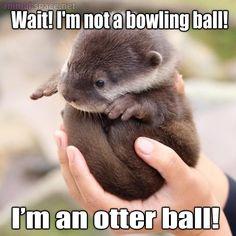 otter ball!!!