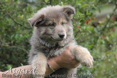 Doggies, Dogs And Puppies, Dog Heaven, Bays, German Shepherds, Fur Babies, Husky, Creatures, Facebook