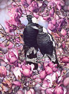 Doodlewash - watercolor painting illustration by Heidi Willis of Magpies in Magnolias Art And Illustration, Illustrations, Art Et Nature, Blog Art, Jackson's Art, Bird Artwork, Watercolor Bird, Australian Artists, Wildlife Art