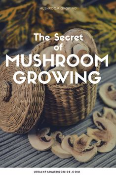 The Secrets To Mushroom GrowingBut this is absolutely not true. In reality, mushrooms are as easy to grow as anything else, and can be a good deal easier. Growing Mushrooms, The Secret, Stuffed Mushrooms, Gardening, Tips, Stuff Mushrooms, Lawn And Garden, Horticulture, Counseling