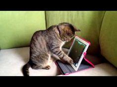 """I iz on ur ipadz. Katchin te red dotz."" #SimonAndStellaCats #Stella #Simon #cats #cat #kitty #kitties #kitteh #kittehs #gato #gatos #monkeybuns #furpig #neko"