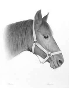 """""""Bonnie"""" by Christine Perry  #GraphiteArt, #HorseDrawings,"""