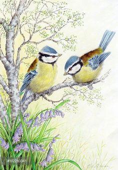 Pretty Birds, Beautiful Birds, Love Painting, Painting & Drawing, Watercolor Bird, Watercolor Paintings, Bird Artwork, Bird Illustration, Bird Drawings