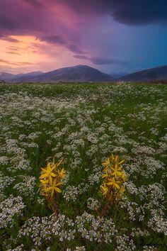 Spring by Dimitrios Katrantzis on 500px