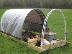 chicken tractor with tarp. Half covers the coop. Also love the runners. This would make a HUGE difference. Easy Chicken Coop, Chicken Garden, Chicken Coop Designs, Backyard Chicken Coops, Chicken Coop Plans, Chicken Runs, Backyard Farming, Chickens Backyard, Chicken Ideas