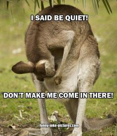 Funny Kangaroo Mother Fight Joke Picture | Funny Joke Pictures