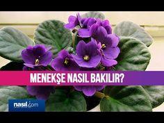 Menekşe bakımı nasıl yapılır? | Nasil.com - YouTube