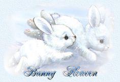 heaven bunny - Buscar con Google