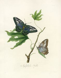 Donovan Insects of China Prints 1842