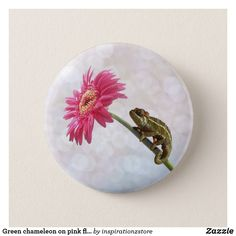 """Green chameleon on pink flower pinback button lizard, reptile, chameleon, chameleons, lizards, reptiles, green, cute, animal, animals, chamilion, photo, photography, flower, pink, """"hot pink"""", gerbera, floral, photograph, white, bokeh, pretty, girly, baby, little,exotic, pet, pets, jungle, sweet, cameleon, wildlife, nature, natural, funny, fun, humorous, whimsical, humor"""