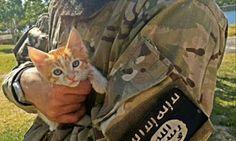 """""""O Grito do Bicho"""": Estado Islâmico declara guerra aos gatos"""