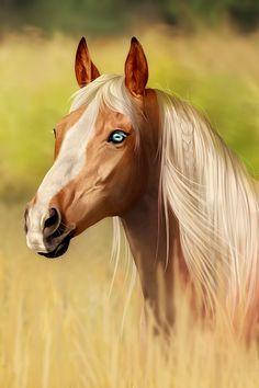 .:: Piece of Art ::. by *noblestallion on deviantART