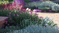 Vibrant colours in this gravel garden in Toledo Dry Garden, Gravel Garden, Garden Plants, Garden Landscaping, Back Gardens, Outdoor Gardens, Plant Design, Garden Design, Autumn Clematis