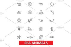 Sea animals, ocean creatures, dolphin, octopus, wild life, shark, whale, fish line icons. Editable strokes. Flat design vector illustration symbol concept. Linear signs isolated on white background by urban icon on @creativemarket